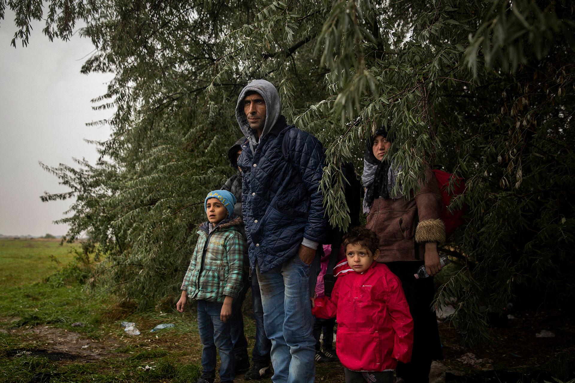 Una familia procedente de Siria espera junto a un pequeño bosque una señal para salir a coger un taxi ilegal. Al entrar en Hungría por el paso de Roszke, escaparon de la policía a través de una plantación de maíz. (Roszke. Hungría. 10/09/2015).
