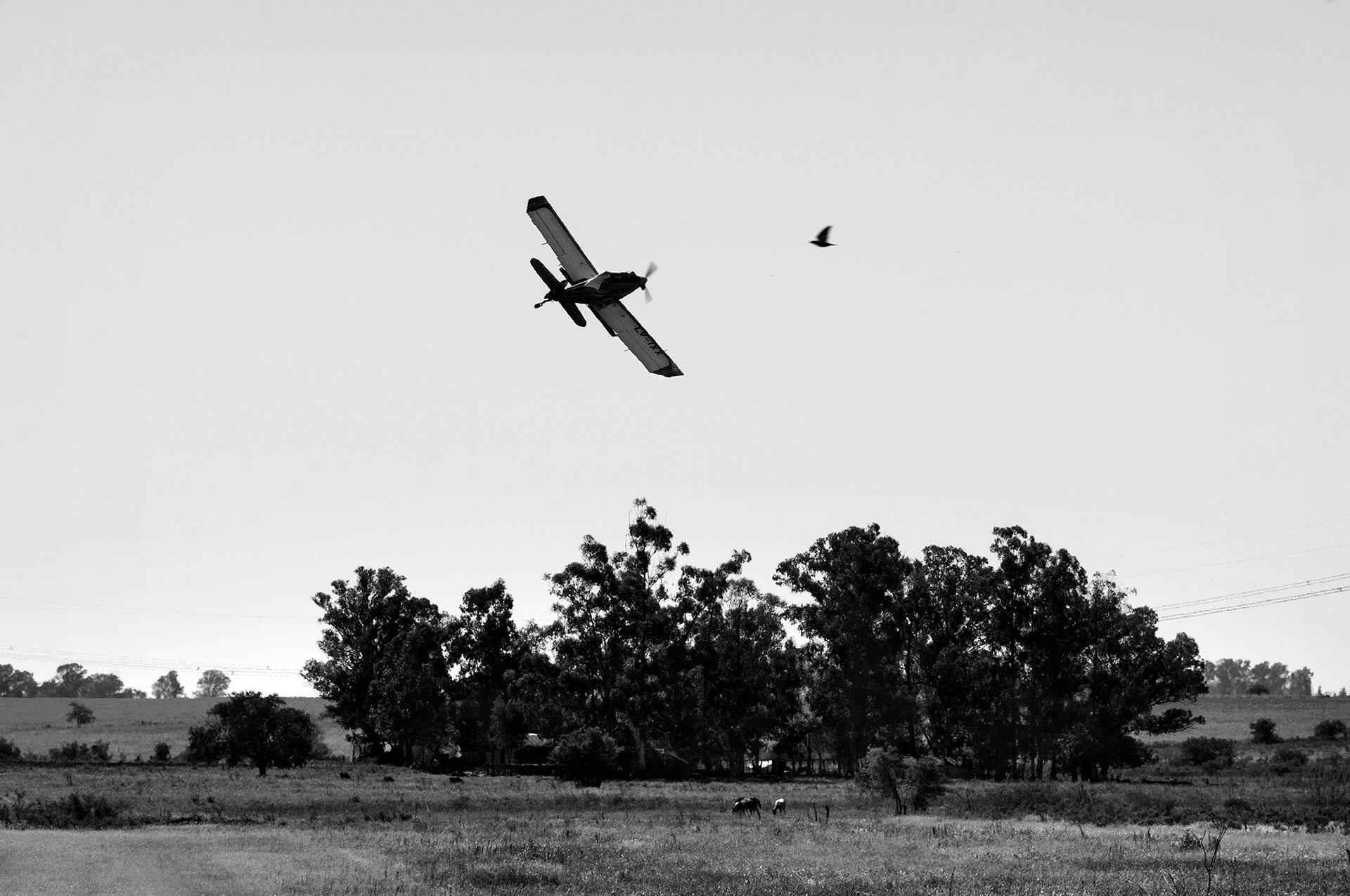 3/4/2015. San Salvador, Entre Ríos. Un avión de fumigación sobrevuela los cultivos.