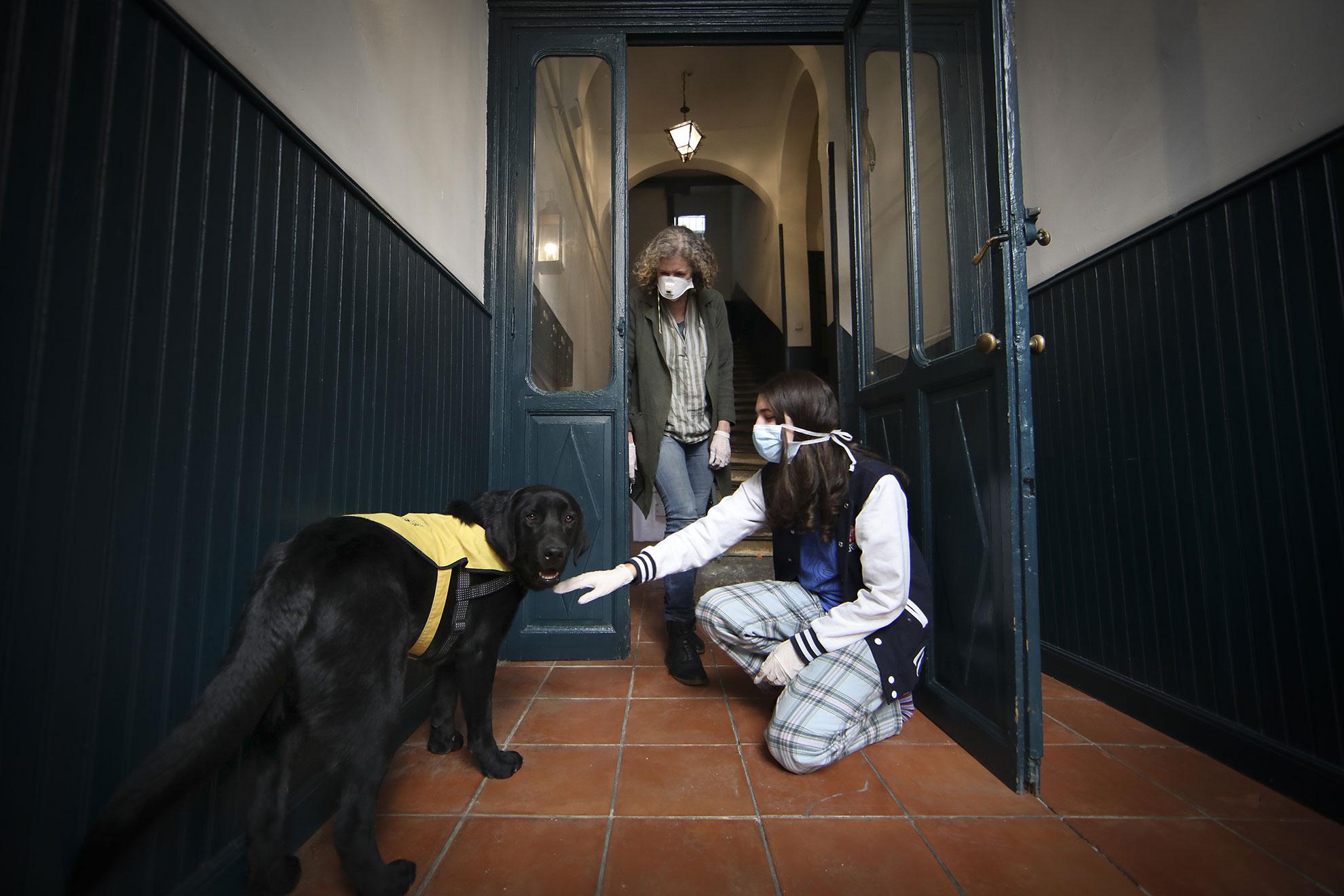 Hurón llegó a casa de Helen cuando era un carrocho. Pero este labrador de 18 meses estaba destinado a ser perro guía de la ONCE, y por eso tuvo que dejar su hogar en Lavapiés para comenzar la formación hace unos meses. Helen (54) de origen británico y madrileña de adopción, pensaba, que su familia no lo volvería a ver, pero el entrenador de Hurón ha tenido que dejar de trabajar por ser paciente de riesgo ante el Covid-19, y el perro se ha quedado sin su cuidador de la noche a la mañana. Por eso, cuando la llamaron para proponerle que lo acogiera de nuevo, hasta que la situación volviera a la normalidad, ella dijo que sí. El regreso de Hurón ha alegrado la cuarentena a toda la familia, pero sobre todo ha subido la moral a Helen, preocupada ahora por la economía familiar, ya que es autónoma y ha tenido que parar su actividad. A pesar de todo, se siente afortunada por vivir en una casa espaciosa y con terraza, que comparte de nuevo con este amigo de cuatro patas.