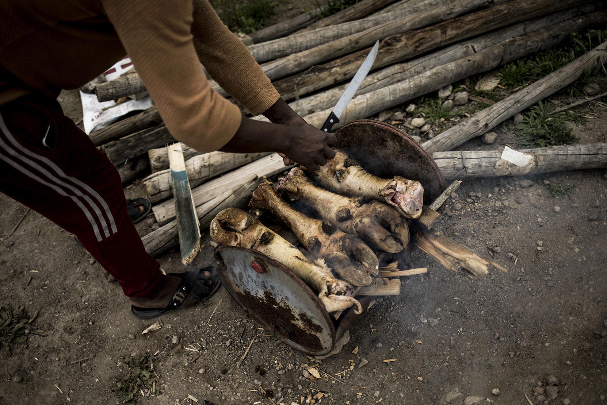 El asentamiento chabolista del Cortijo Don Domingo en Níjar ha experimentado un crecimiento exponencial tanto en el número de chabolas como el de personas que lo habitan. Más de 200 personas migradas de Marruecos y Ghana, principalmente, habitan en condiciones insalubres, sin agua corriente o electricidad. La situación provocada por el COVID-19 hace que no puedan desplazarse para trabajar en los invernaderos, la pobreza y el hambre comienzan a ser patentes en la comunidad. En la imagen, una persona cocina pezuñas de vaca en una lata de aceite oxidada.