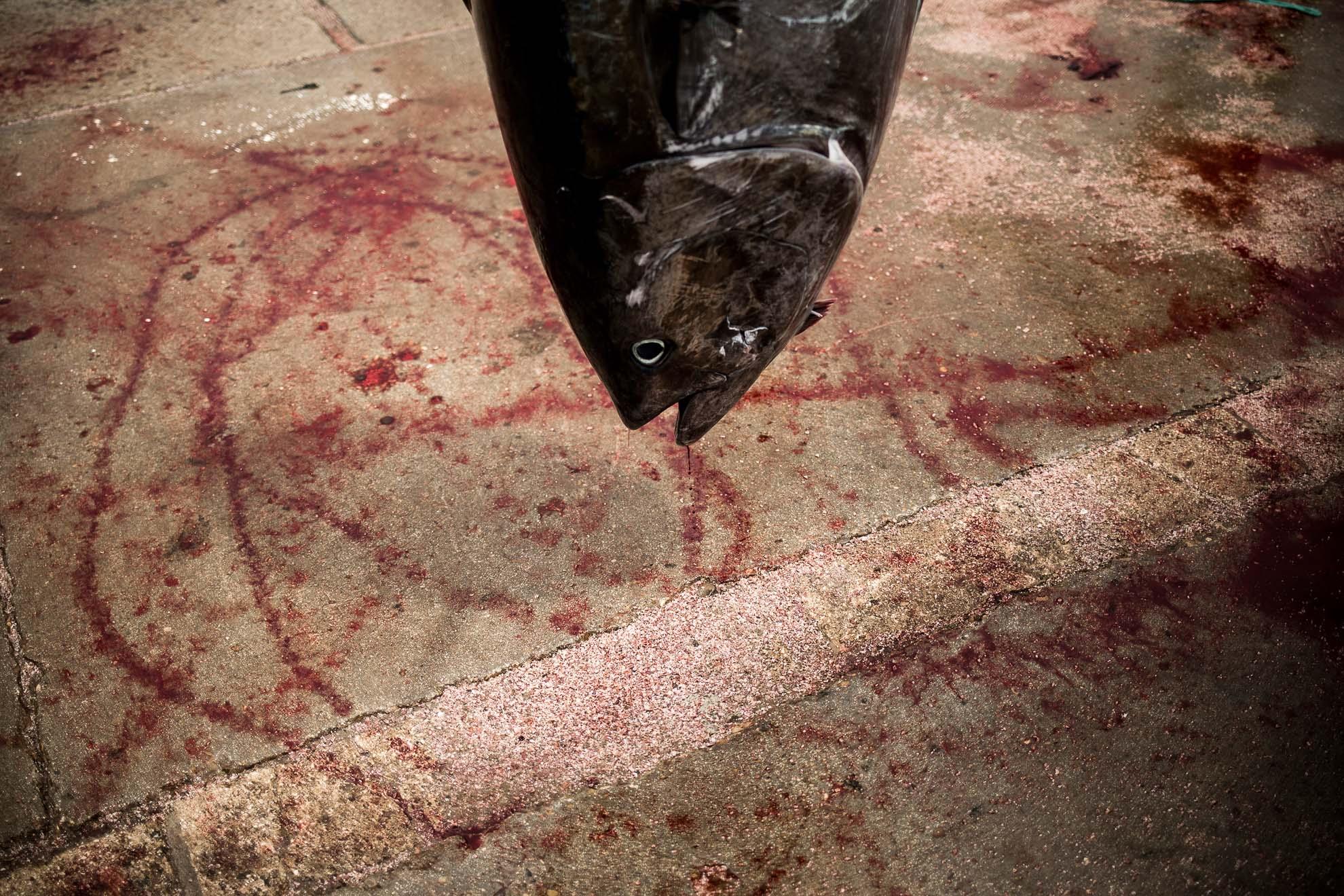La almadraba en la provincia de Cádiz es un sistema de pesca milenaria del atún rojo salvaje que, aprovechando el paso por el Estrecho de Gibraltar en su proceso migratorio, captura grandes piezas muy cerca de la costa. Muy apreciado por su calidad, el cupo pesquero se vio reducido durante muchos años debido al drástico descenso en número de ejemplares. Este año es el primero en el que el cupo ha subido, al haberse recuperado la especie. Pero este hecho tiene un sabor agridulce para la comarca de La Janda, ya que la pandemia ha truncado la salida a gran parte del mercado de su producto estrella.