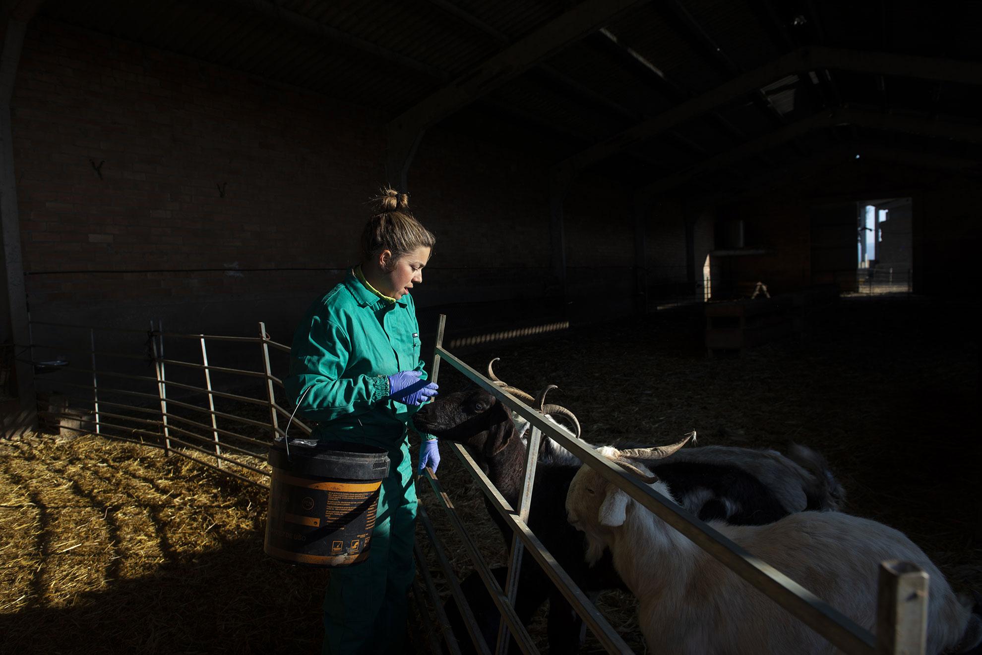Judit tiene 28 años y es una de las pocas ganaderas en Aragón que se dedica al pastoreo tradicional de ovejas y cabras y practica la trashumancia; un tipo de pastoreo en vias de estinción en todo el pais. Durante la crísis del covid-19 y, apesar del estado de alarma, sigue cuidadn su rebaño. Por la mañana antes de salir al campo con las ovejas cuida a las cabras enfermas y ayuda a los cabritos a tetar de sus madres.