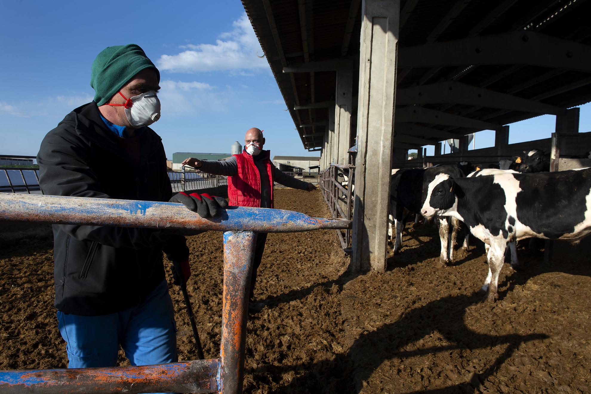 Enrique y Claudio trabajan en el campo. Cuidan de una granja de terneros y varias fincas en Altorricón. Su trabajo no ha cesado durante toda la pandemia. La agricultura y la ganadería son un servicio esencial, hoy y siempre, para mantener abastecida de alimentos a la población.