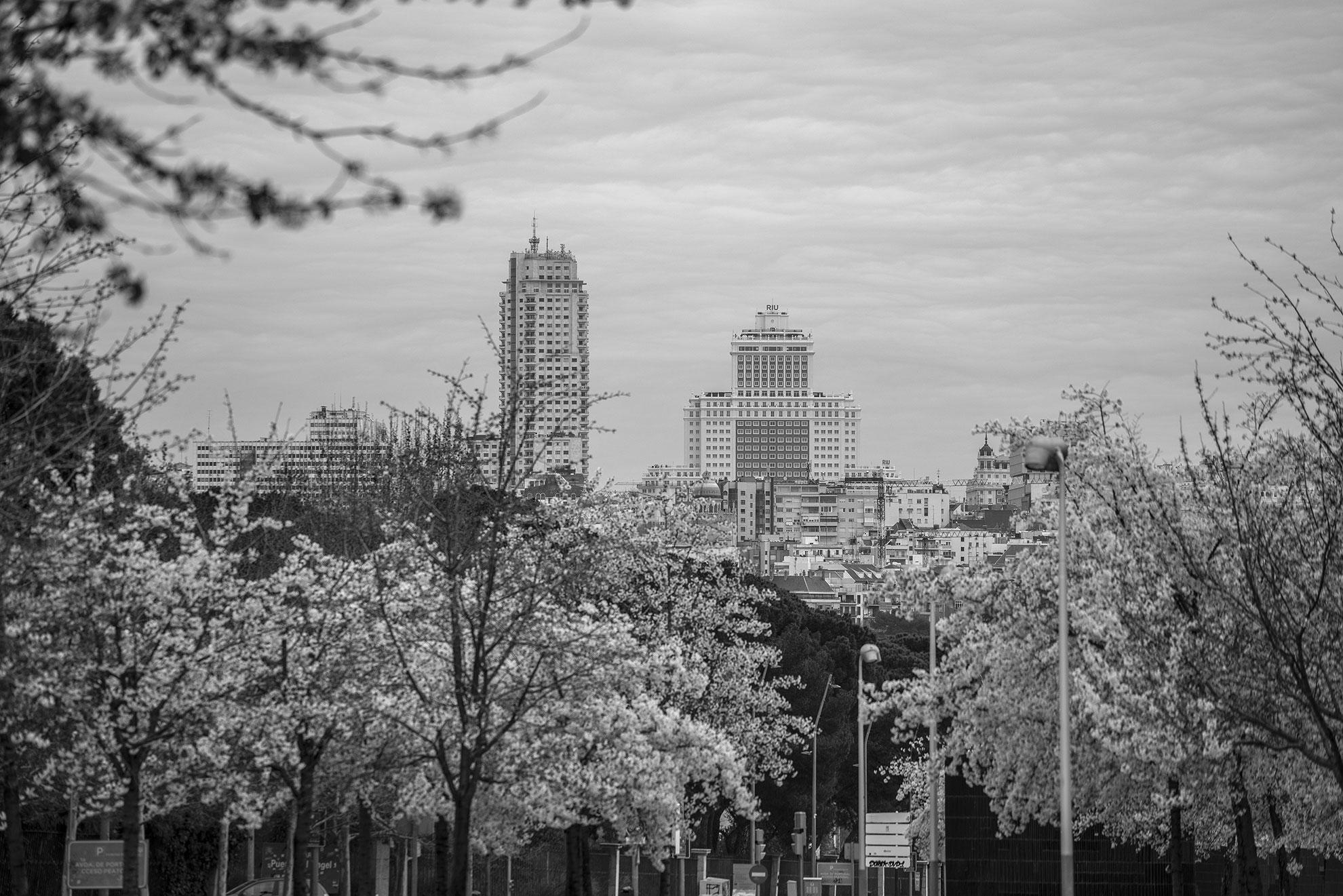 Los árboles en flor, radiantes con la ciudad en el horizonte. Calma en la calle. Paciencia en las casas. Estas vistas me regaló Madrid en el camino de vuelta a casa cuando salimos del médico, justo el día que llegó la primavera.