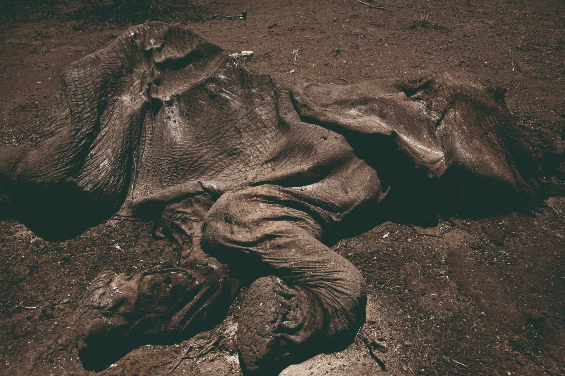 Cadáver de elefante en el Parque Nacional de Samburu, en la provincia Central de Kenia. Octubre de 2009.