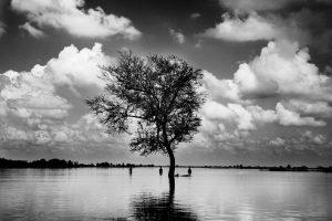 Árbol en medio de la zona inundada en el Estado de Bihar, en el nordeste de la India; 11 de septiembre de 2008. Según fuentes oficiales de Bihar, más de 560.000 personas han tenido que ser evacuadas hasta la fecha y en torno a 200.000 trasladadas a campos de socorro del Gobierno, muchos de los cuales están quedando también bajo las aguas.